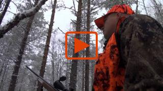 Embedded thumbnail for Ammunko vai jätänkö ampumatta??? (hirvi)